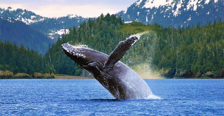 oceania_cruises_alaska_cruises.jpg