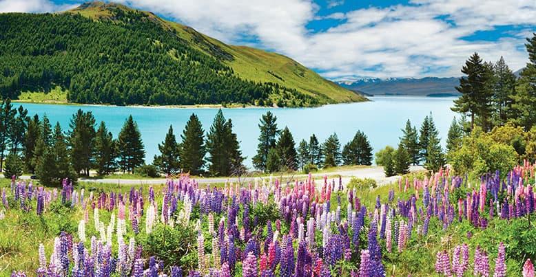 Australia New Zealand Cruises Oceania Cruises - Cruises to new zealand