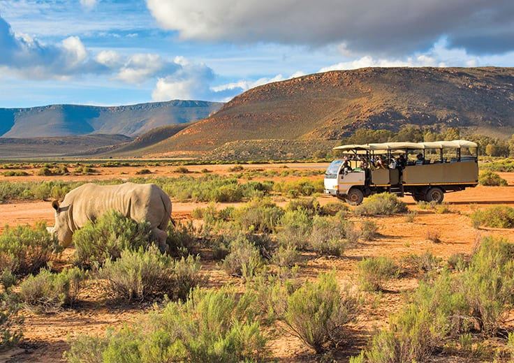 Safari Adventure Kruger National Park